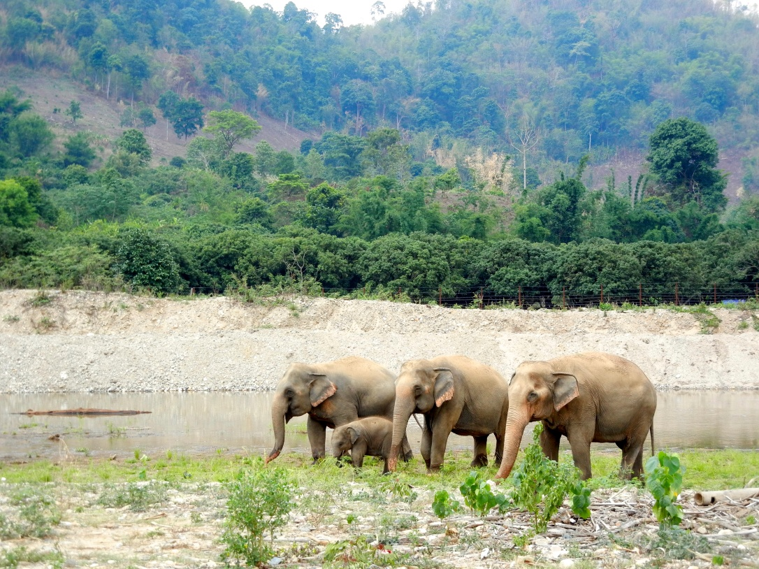 Elephants at the Elephant Nature Park in Chiang Mai, Thailand