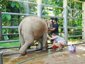 Claire and Big completing a daily foot cleaning on a young elephant