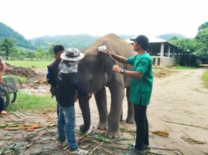 Dr. Tom scanning an elephant for its microchip
