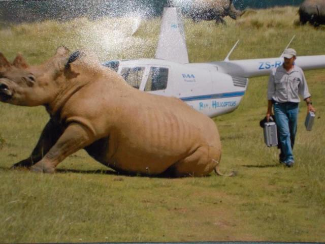 Dr. Willem Burger Darting a rhino