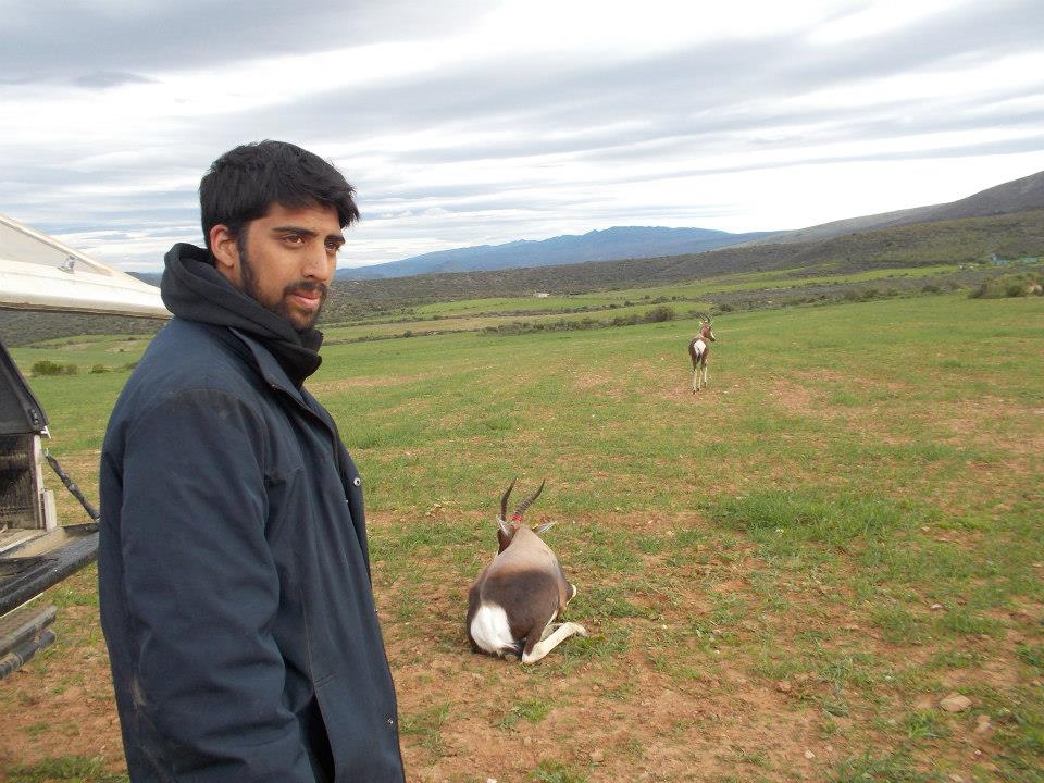 Releasing the bontebok after microchipping and blood collection